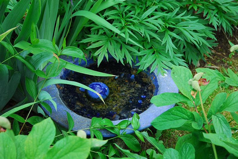 liten vattensamling i trädgården