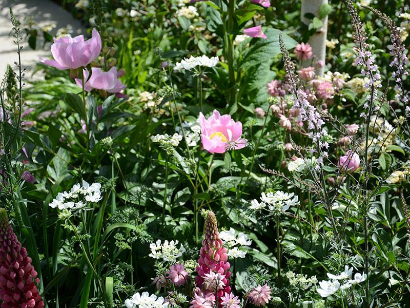 blommor i trädgården som fjärilar gillar
