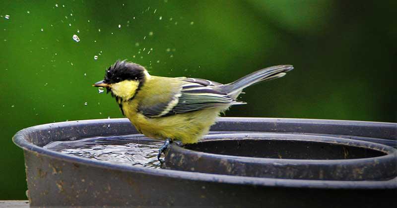 Vatten till fåglar i kakform