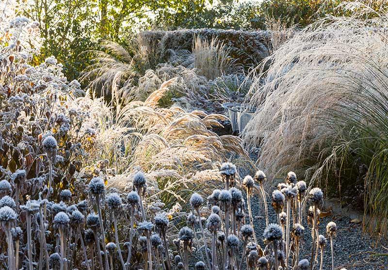 Vintervänlig trädgård för fåglar