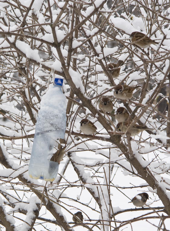 Pilfinkar vid foderstation med vildfågelfrön