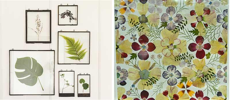 Konstverk av pressade växter med växtpress