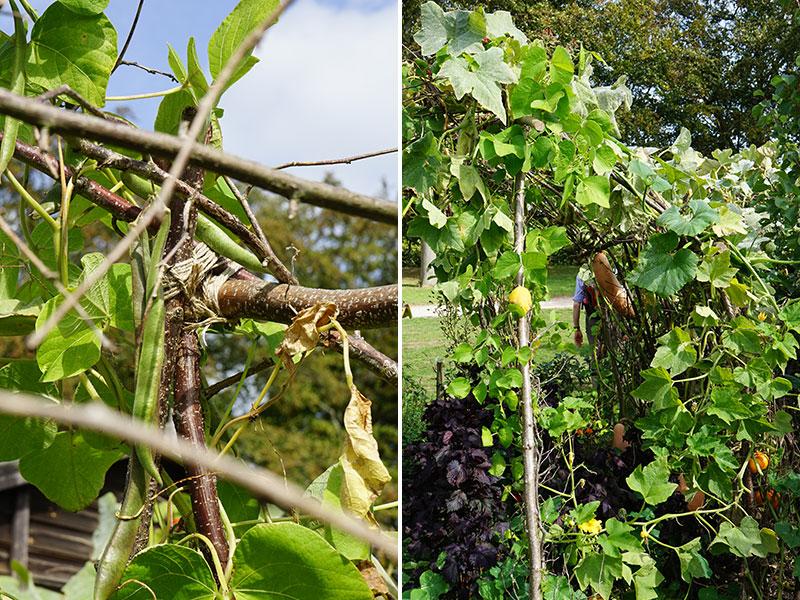 Hemmagjord klätterställning till klättrande grönsaker