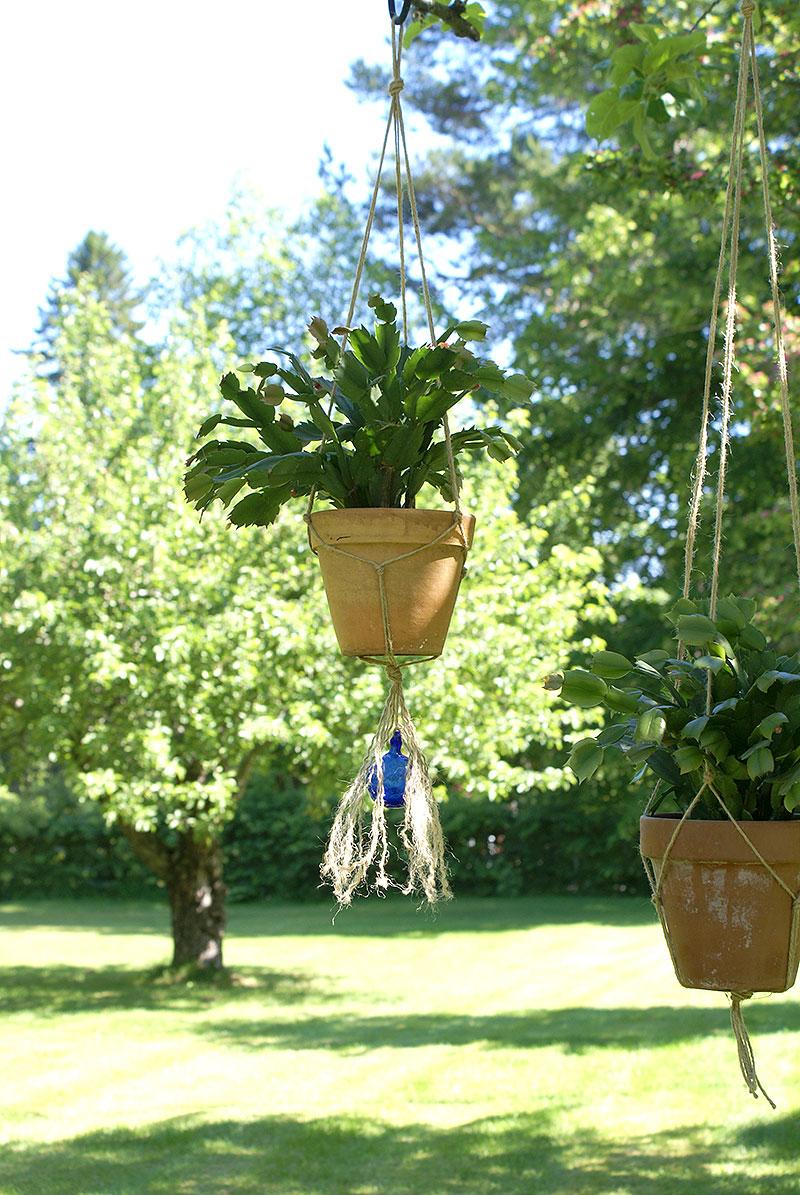 Krukväxter hänger under ett träd i repampel
