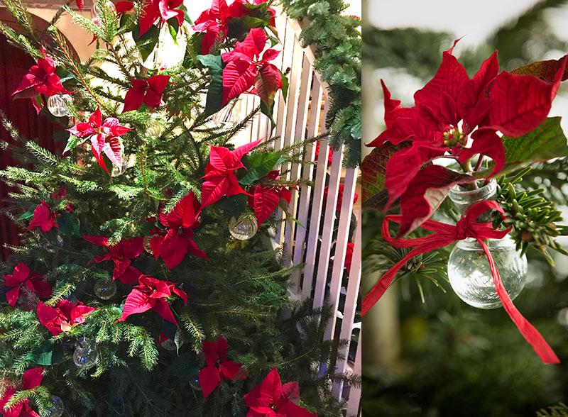 julstjärnor hängande i julgran