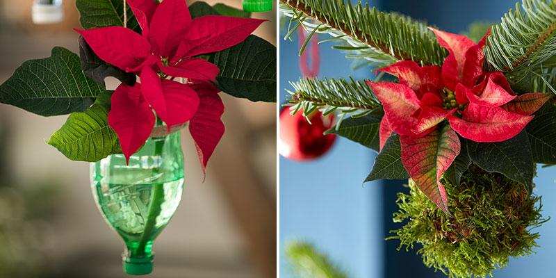 Hängande julstjärna i petflaska och i mossboll