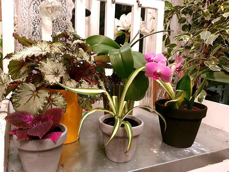 krukväxter i ommålade ytterkrukor och blomkrukor