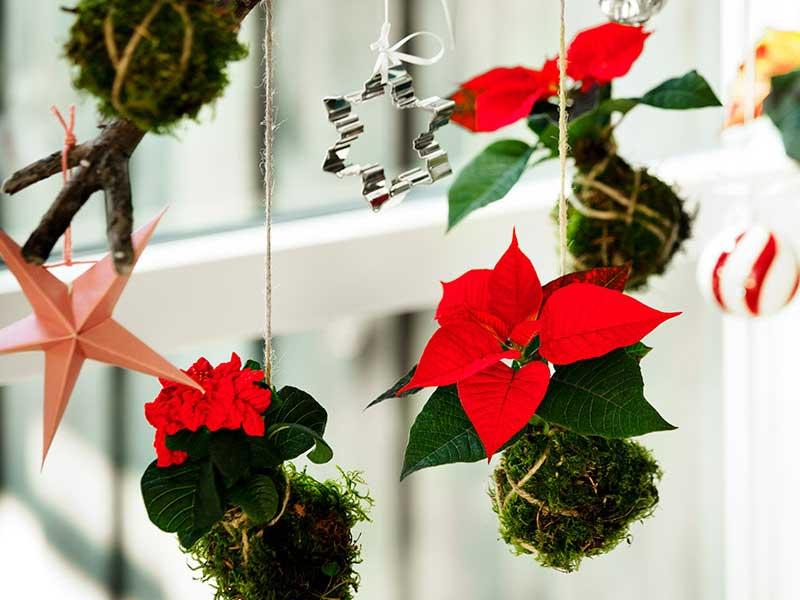 Hängande julstjärna i mossboll till jul