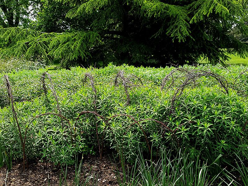 Växtstöd i stora perennrabatten på Kew Gardens
