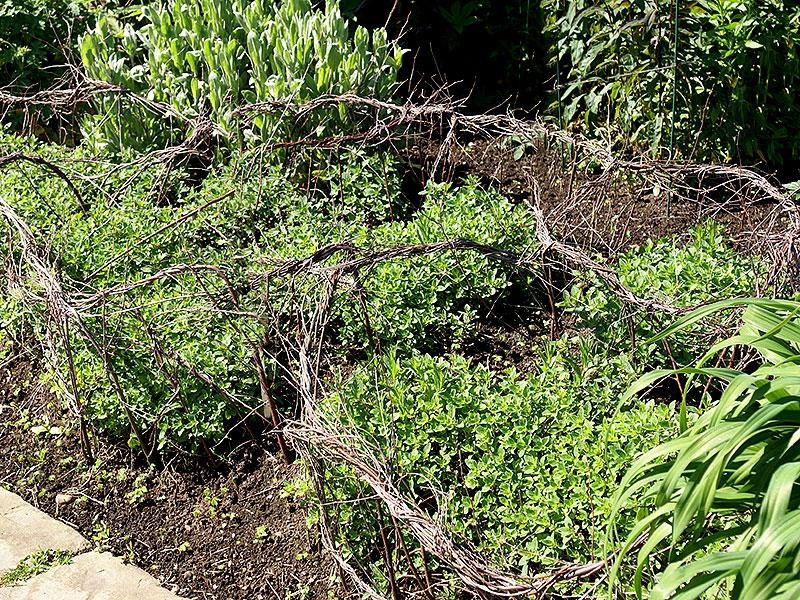Växtstöd för perenner av flätade grrenar