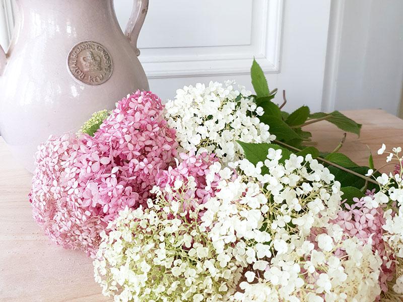 hortensiablommor klara att torkas