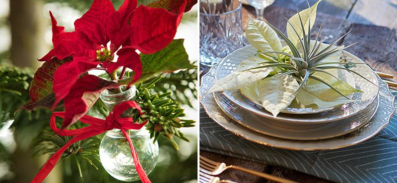 julstjärna som snittblomma i vas och vid bordskuvert med nyårsdukning