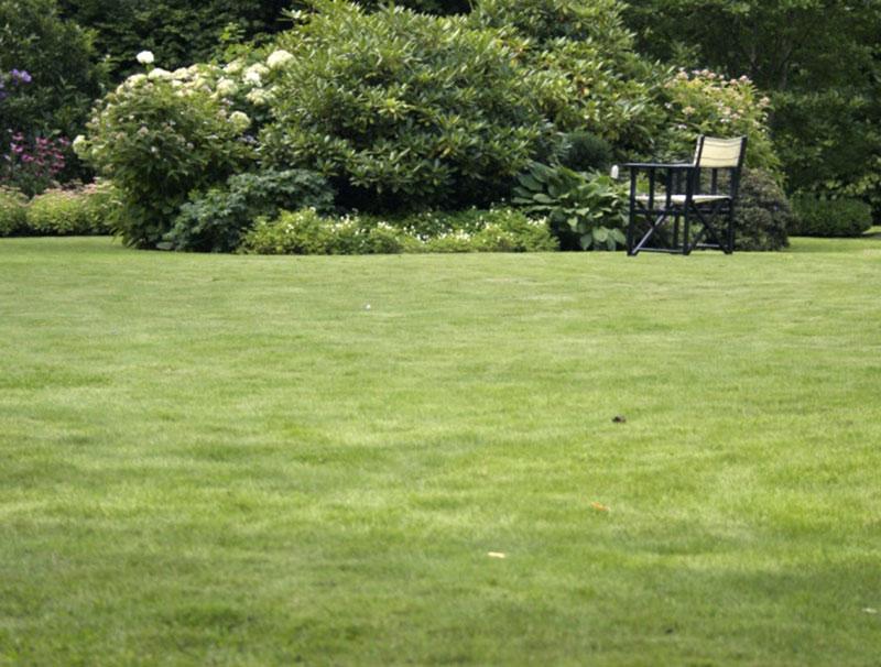 Gräsmatta i trädgård