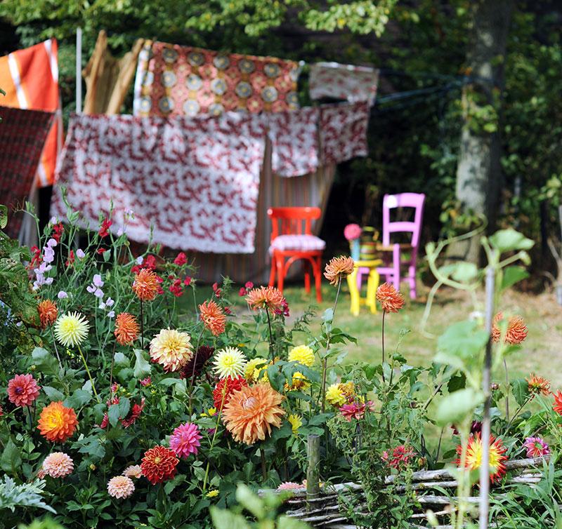 Dahlior i trädgården