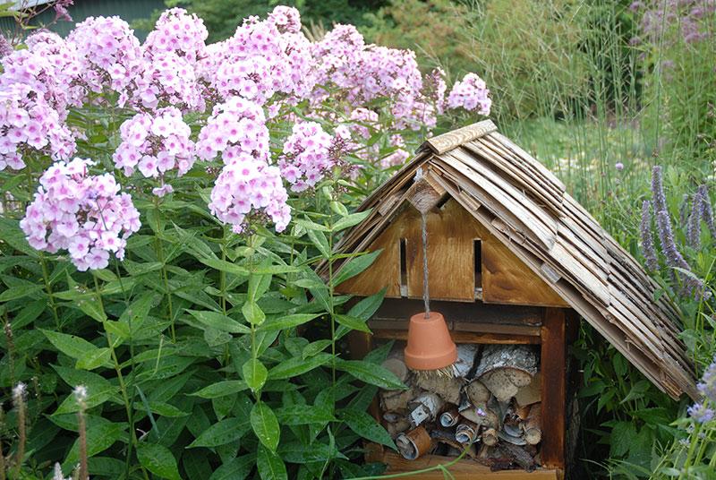 Flox och insektshotell