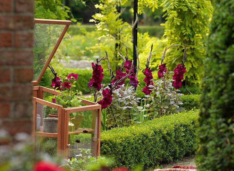 Rum i trädgården med gladiolus