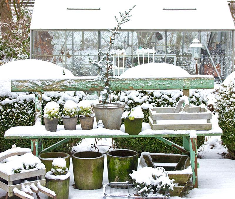 Trädgård på vintern med krukor och växthus