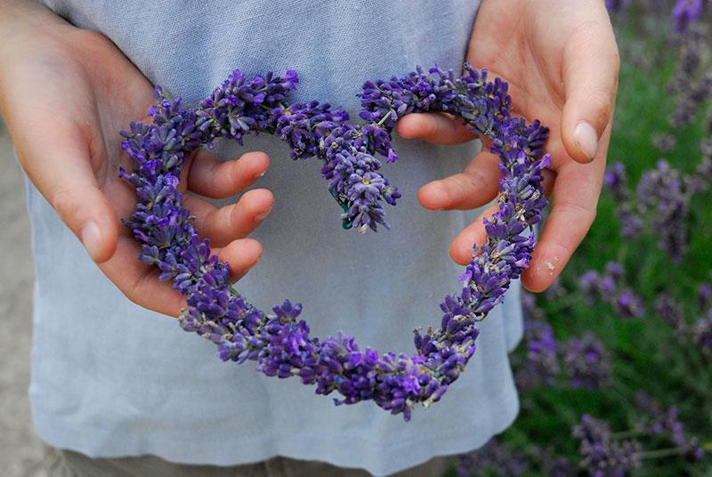 Hjärta av lavendelblommor