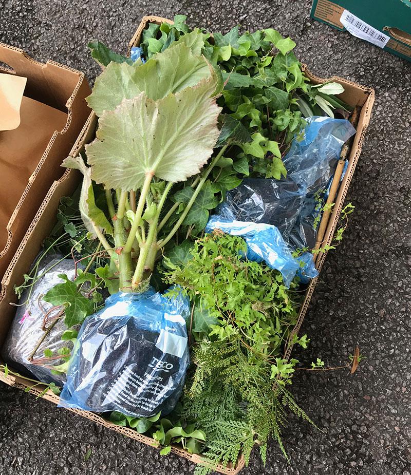 Växter i resväska