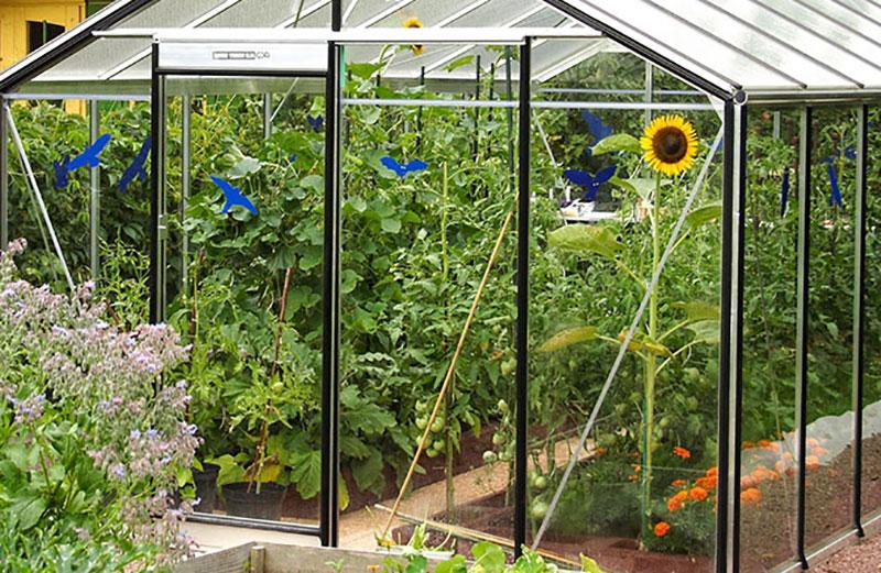 Växthus Expert på sommaren