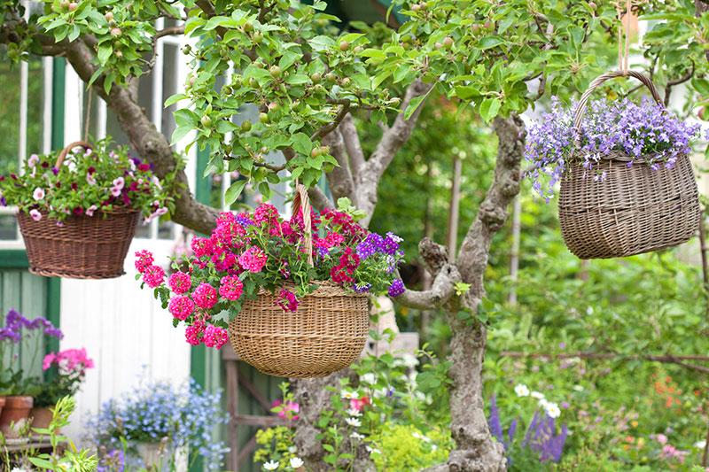 Blomsteramplar av gamla korgar i träd