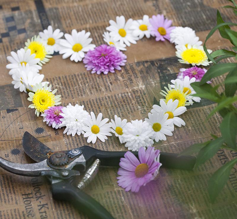 Blomsterhjärta med margeriter midsommar