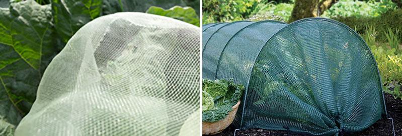 Insektsnät mot skadegörare på kålväxter