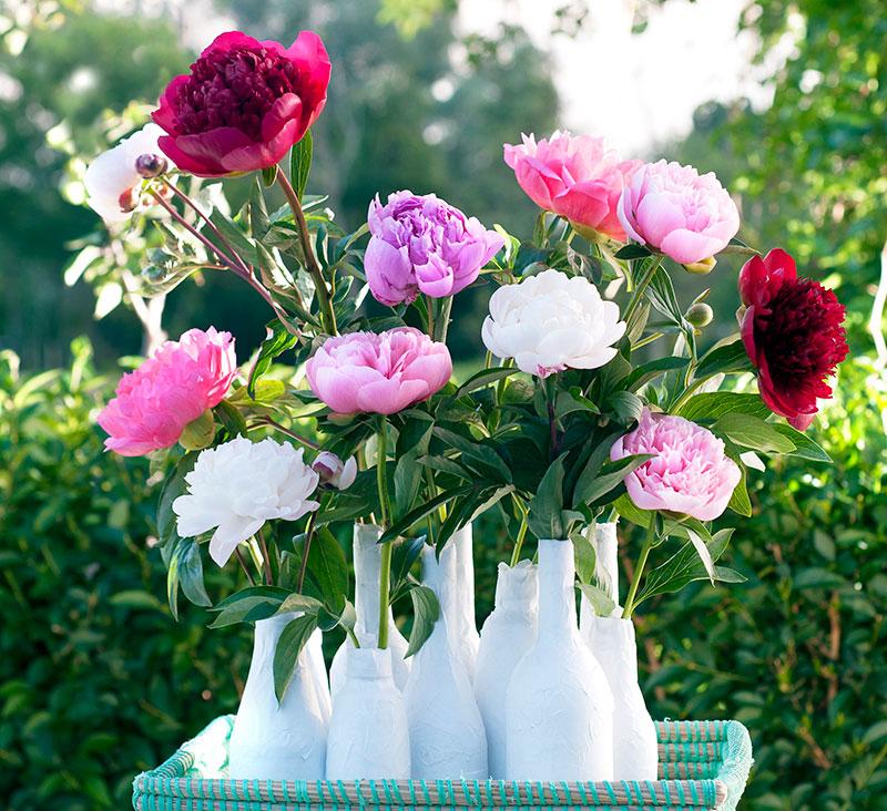 Luktpioner i flera små vaser