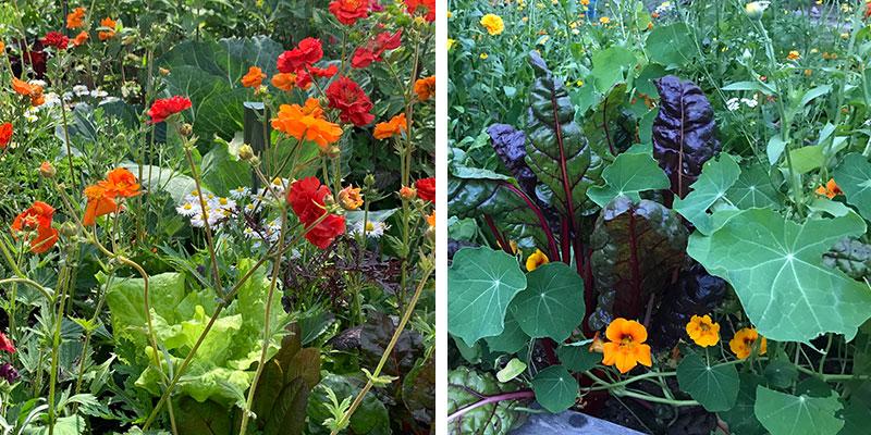 Blommor och grönsaker i samodling