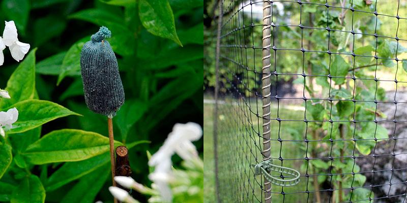 Skydd mot rådjur i trädgården