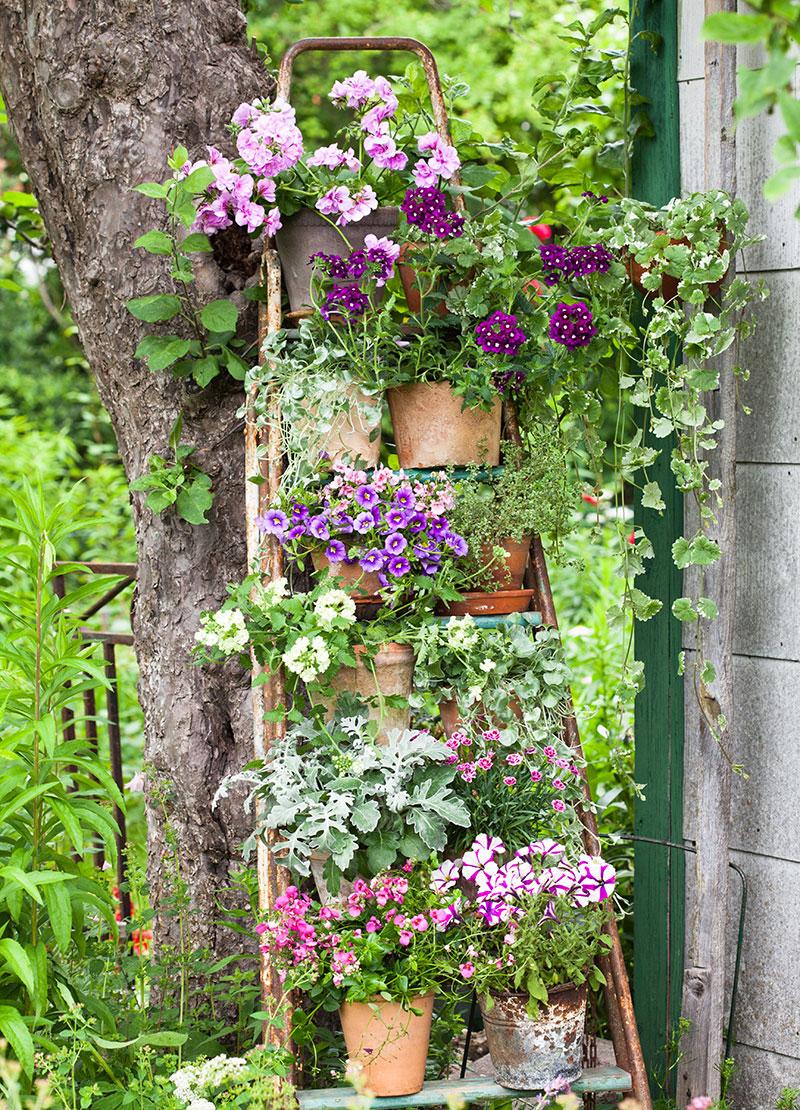 Stege som hylla till krukväxter