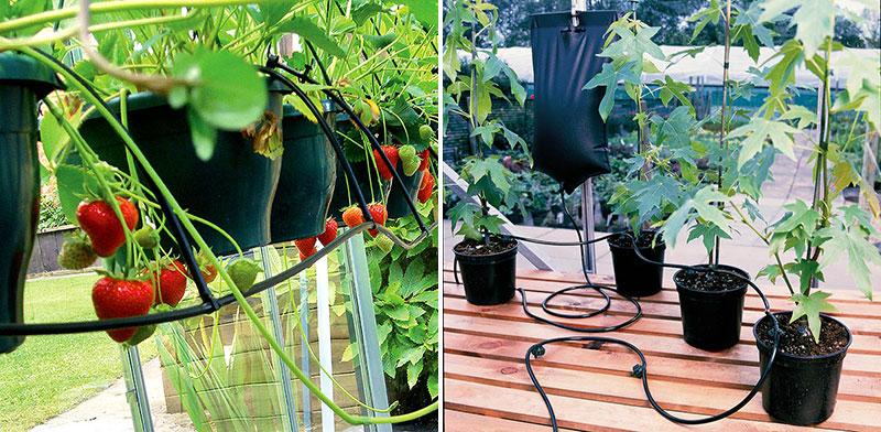 Automatisk droppbevattning i växthus
