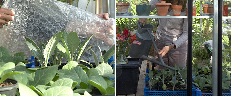 Isolering med bubbelplast i växthus på våren