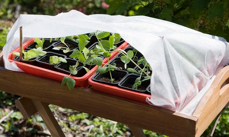 Fiberduk för skydd vid avhärdning på våren