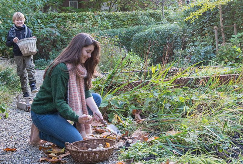 Plantering av vårblommande höstlökar i rabatten