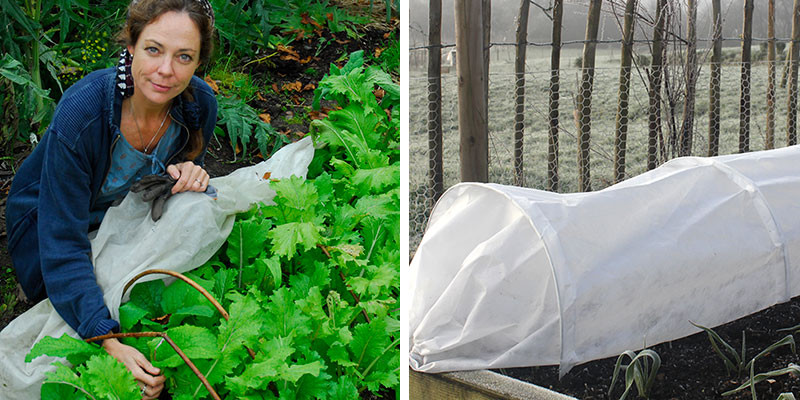 Odlingstunnel och växtduk för köksväxtodling på hösten