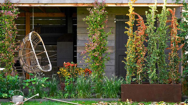Trädgård i september