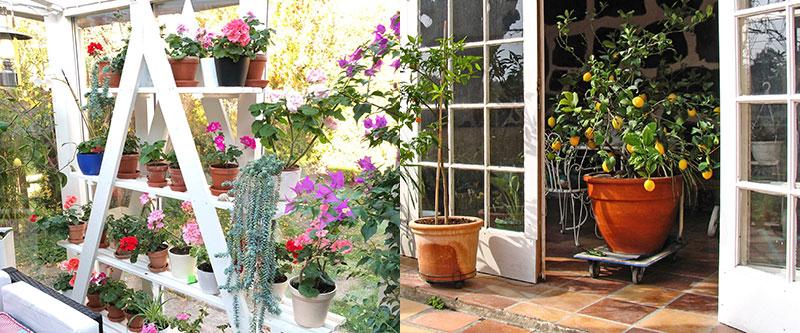 Växttrappa i växthus
