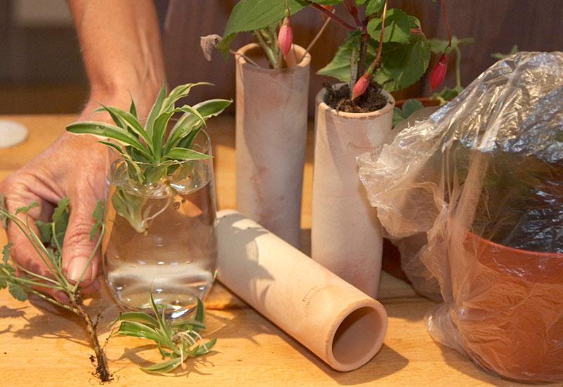 Förökning av krukväxter