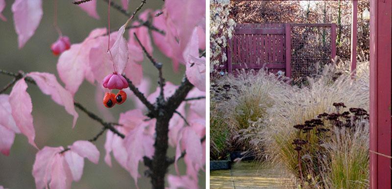 benved med frukt, prydnadsgräs och fröställningar av perenner i november