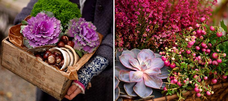 Plantering av utekrukor i november med prydnadskål, ljung och bärljung