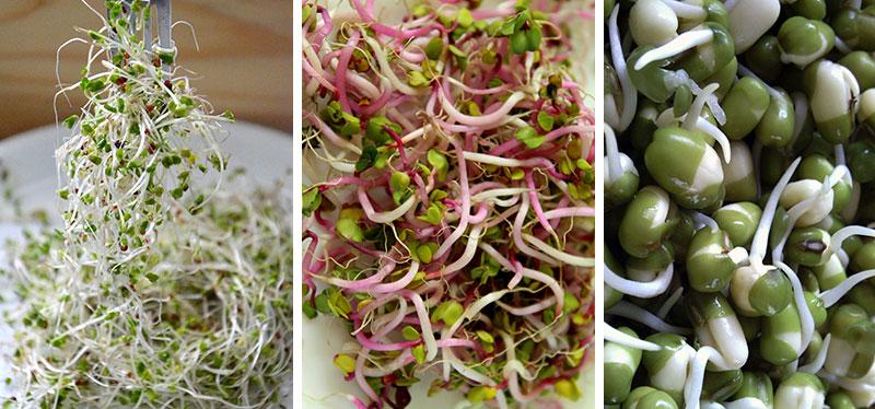Groddning av broccoli, rädisa och ärta