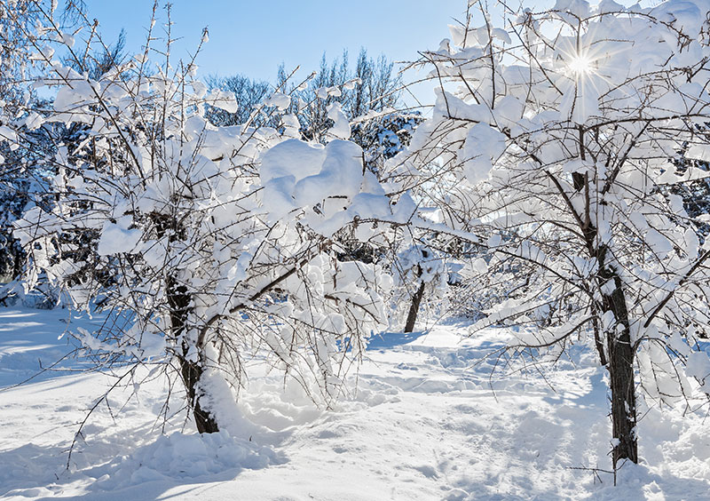 Snö i trädgård med fruktträd