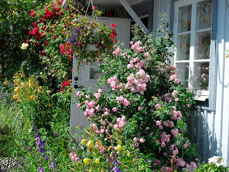 Torpväxter som Engelsk cottage garden