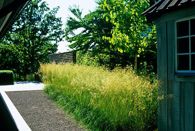 Masseffekt med prydnadsgräs i trädgård