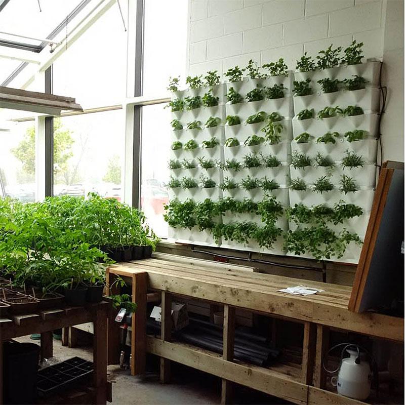 Väggodling i uterum växthus i Minigarden Kitchen garden