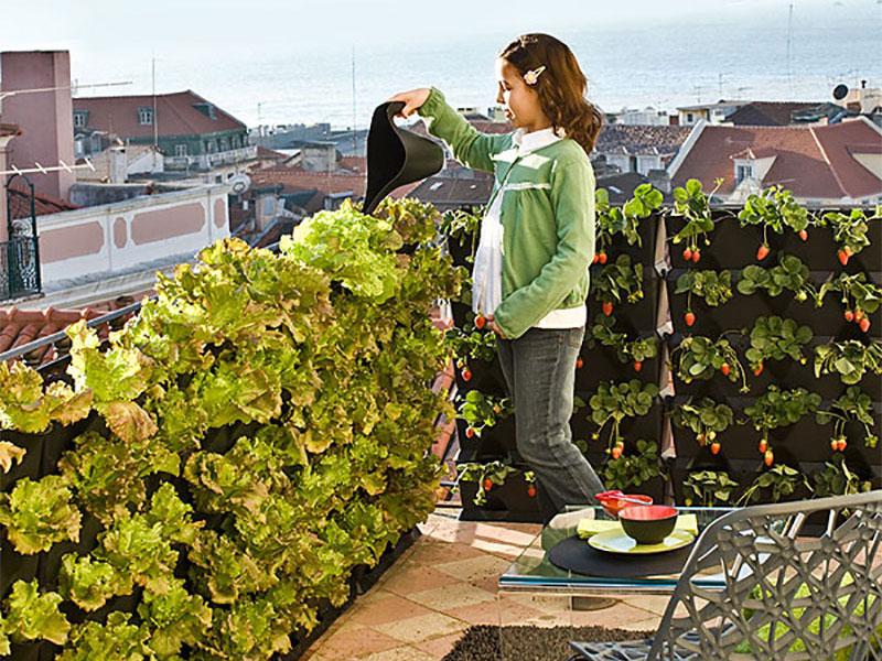 Vertikalodling av sallat och jordgubbar på balkongen