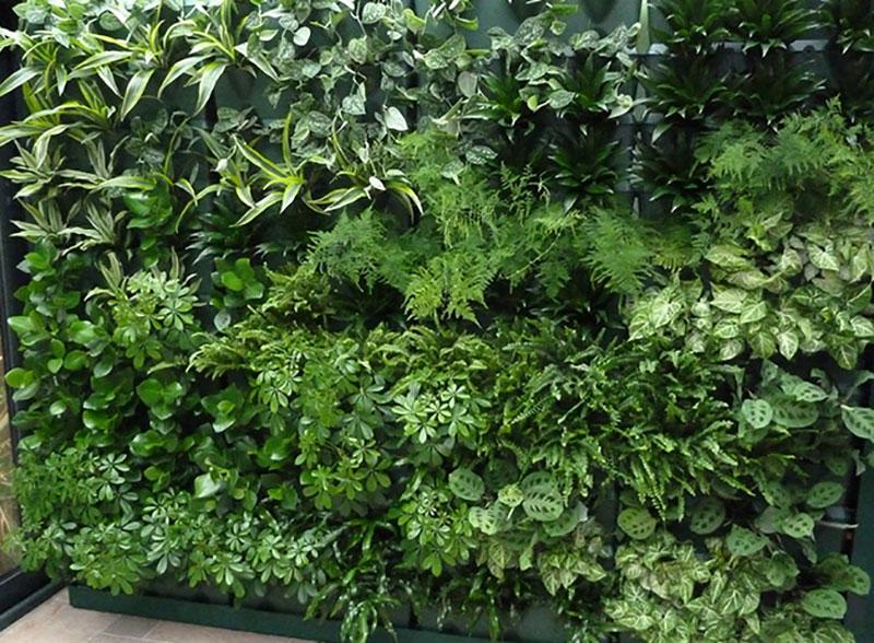 Växtvägg inomhus med gröna växter i Vertical Minigarden