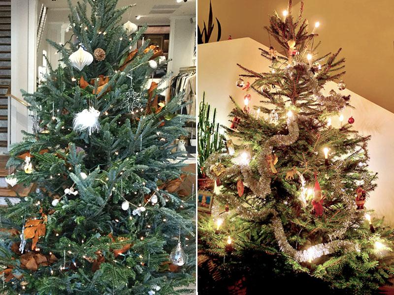 Kungsgran och rödgran som julgranar