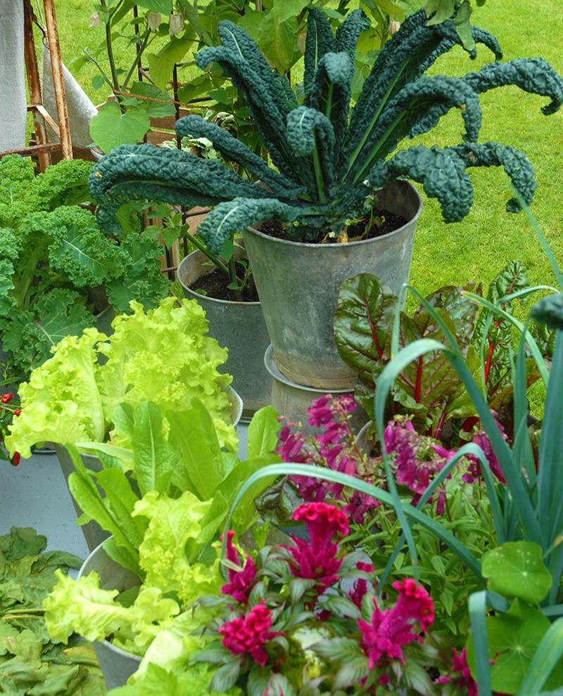 Köksväxter svartkål sallat i kruka med blommor